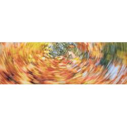 Shake Bild - Olivenbaum